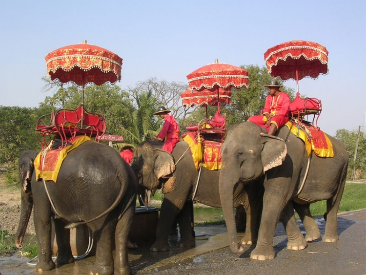Ayutthaya Elephant Camp in Thailand 001