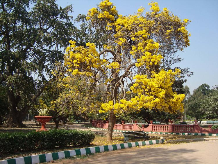Lalbagh (garden), India (trip idea) includes: bangalore, lalbagh ...