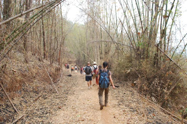 Trek-group walking through bamboo forest (image)