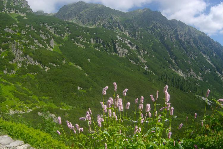 Flowers and Mountains (image)